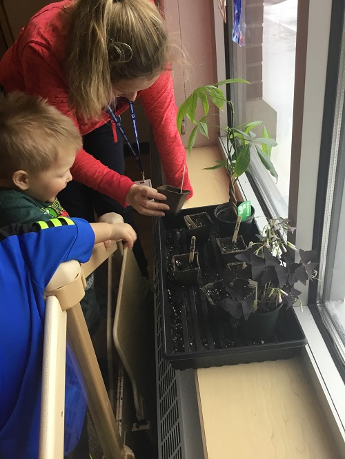 Toddler boy and female educator look at the pots to see the sprouting seeds