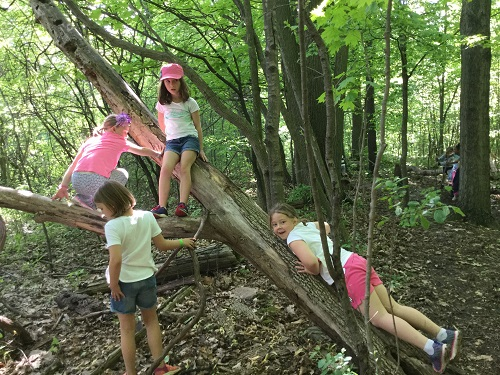 Four girls climb a tree at different heights