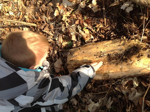 boy looking at bugs under a log in the forest
