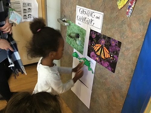 Child labelling a butterfly poster