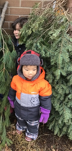 child hiding behing pine trees. second child looking for him