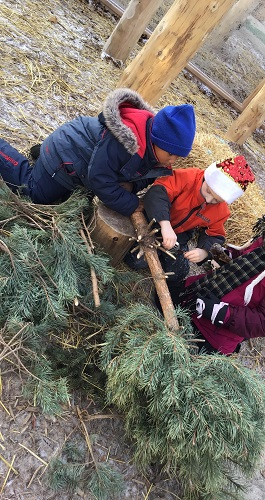 group of Jk age children working together to move a  donated holiday pine tree